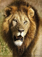 lion portrait by tony karpinski