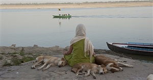 woman meditating with dogs by neil meyerhoff