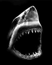 untitled (shark 5) by robert longo