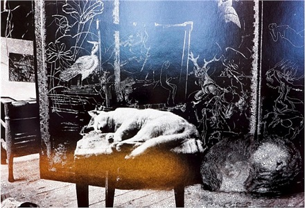cat and sleeping puppy in the atelier by sebastiaan bremer