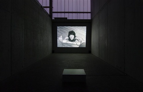installation view by barbara hammer