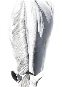horse whisperings #724 by bob tabor