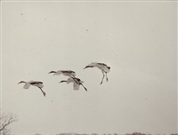 nakazora #1176 by masao yamamoto