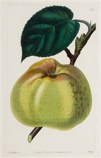apples, pears and peaches (set of 6) by john lindley