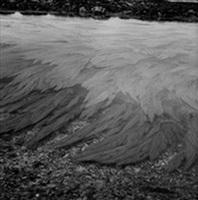 vagues d'alges by jean-luc moulène