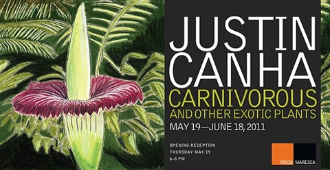 carnivorous and other exotic plants by justin canha