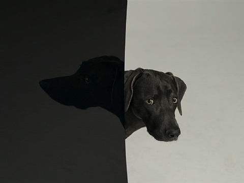 finland by william wegman