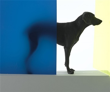 new dawn by william wegman