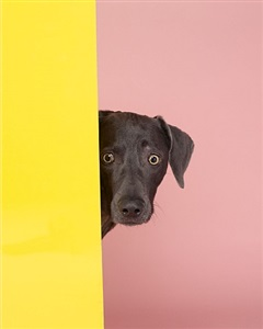 intruder by william wegman