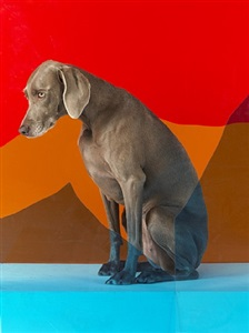 on edge by william wegman