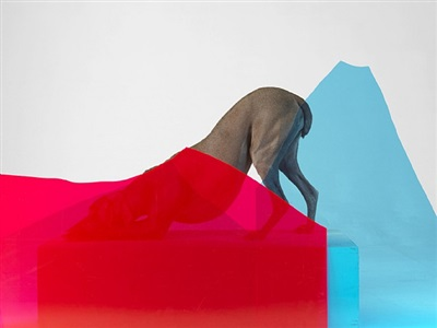 peak performance by william wegman