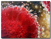 raspberries and champagne by june stratton