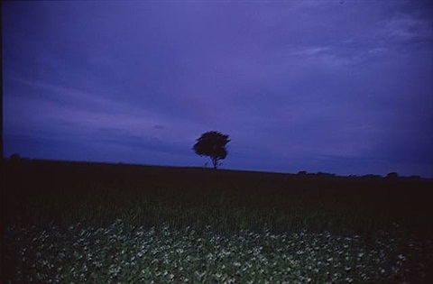 the lonely tree, sweden by nan goldin