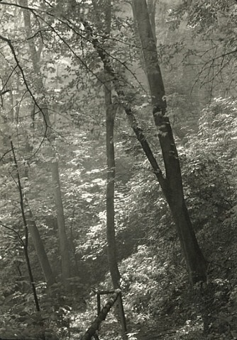 stag's moat (study of trees) by josef sudek
