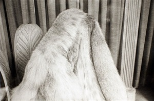fur coat in window, new york city, march 6 by mark cohen