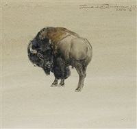 turning bull by thomas quinn