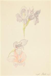gladioli by joseph stella