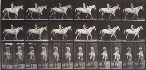 plate 581 from animal locomotion by eadweard muybridge