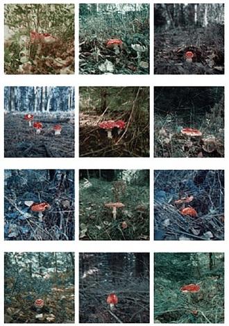mushroom by carsten höller