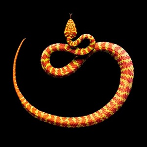 beautiful pit viper by mark laita
