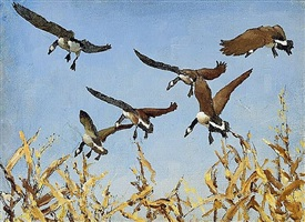 canada geese over corn by richard evett bishop