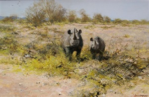 rhinos in namibia by david shepherd