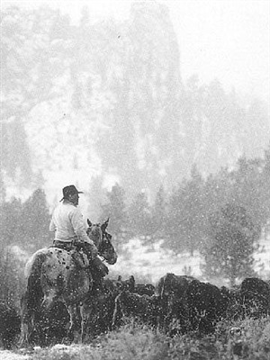 cattle drive #24 - cogan ranch by allen birnbach