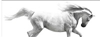 img_2341, from horse whisperings series by bob tabor