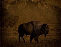 buffalo/tetons, wyoming by jack spencer