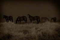 wild horses, green river, wyoming by jack spencer