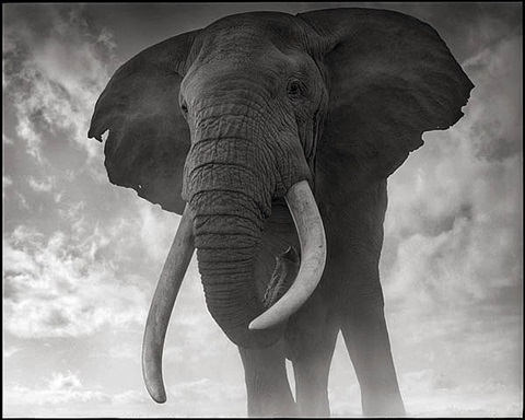 elephant against sky, amboseli by nick brandt
