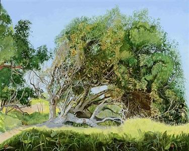 fallen tree by cayetana conrad