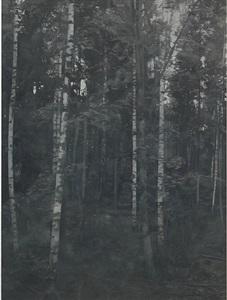 birchwood 1 by paul winstanley