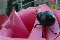 beetle by will ryman