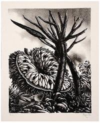 corona de las frutas by jose ramon alejandro