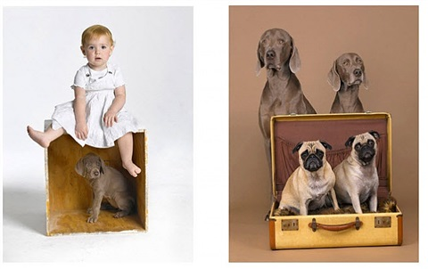 lot #7: a studio photo session with the artist. sit for a portrait (or have a loved one stand in), with wegman's famous weimaraners. a great opportunity for a child's portrait or a near and dear four legged friend by william wegman
