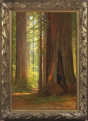 redwoods by lorenzo palmer latimer