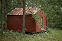 side of red building in forest, hale co., alabama by william christenberry