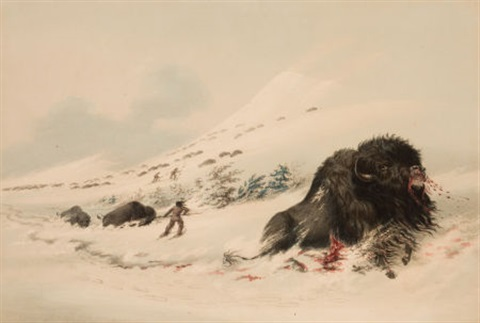 north american indian portfolio dying buffalo bull in snow drift plate 17 by george catlin