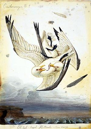 ornithomancy no. 4 by walton ford