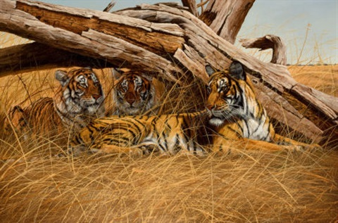 tigers at rest by gary r swanson