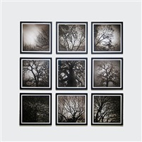 installation shot of tree series by ted kincaid