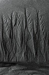 langage des sables, camargue by lucien clergue