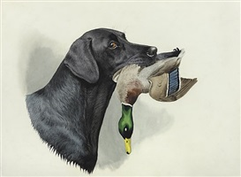 a black lab with a mallard by boris riab