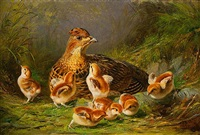 ruffed grouse and young by arthur fitzwilliam tait