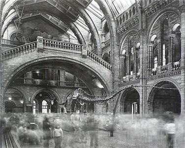 wyoming diplodocus natural history museum, london by matthew pillsbury