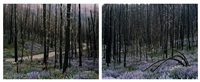midsummer, fisher creek road diptych by laura mcphee
