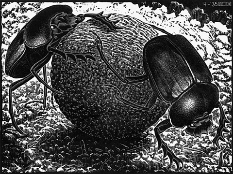 scarabs by m. c. escher