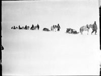 s55a ponies on the march, great ice barrier, 2 dec 1911 by robert falcon scott