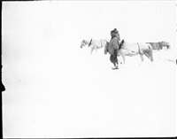 s91 ponies on the march, great ice barrier, 2 dec 1911 by robert falcon scott